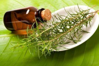 Уникальное масло при беременности - чайное дерево