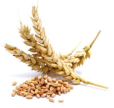 Замечательное масло зародышей пшеницы, его свойства и способы применения