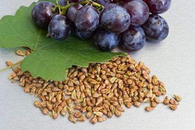 Уникальные свойства и многообразие применения масла виноградных косточек