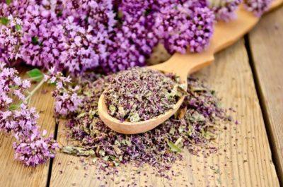 Цветы душицы высушенные и свежие - сырье для производства масла душицы