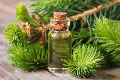 Полезные свойства эфирного масла ели и способы его применения