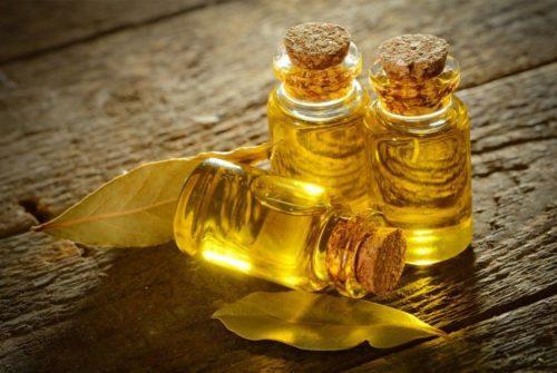 Лавровое масло: свойства и применение