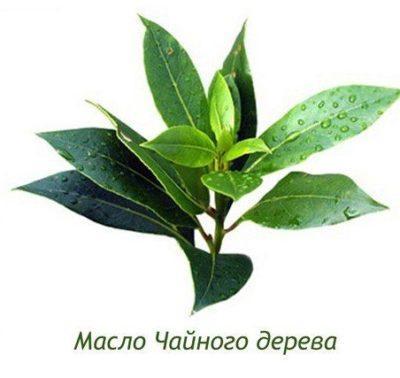 Как применять масло чайного дерева в быту